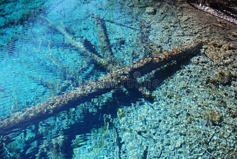 wapniejący wodny drewno zdjęcie royalty free