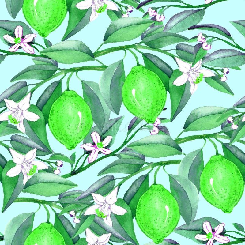 Wapno rozgałęzia się z owoc i białymi kwiatami na miękkim błękitnym tle ilustracji