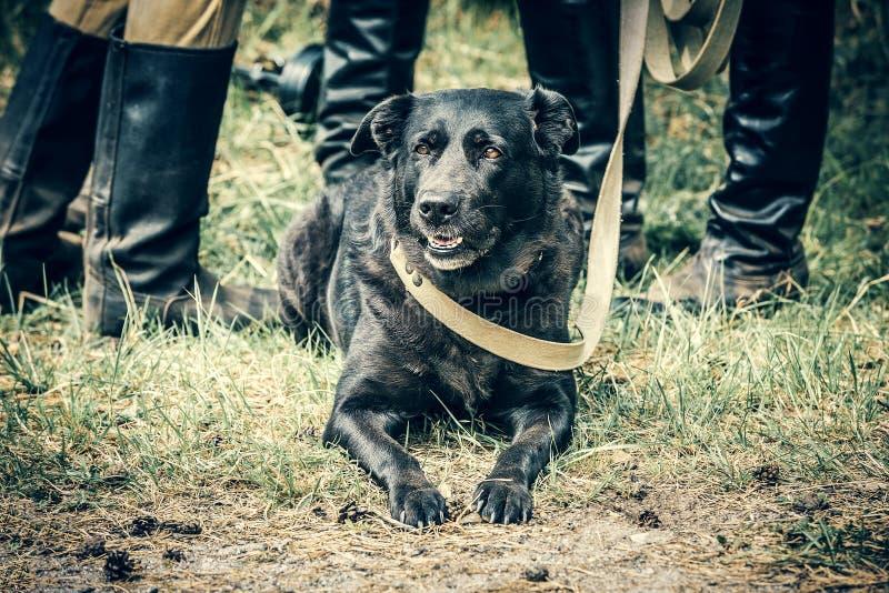 War-dog. At the service stock photography
