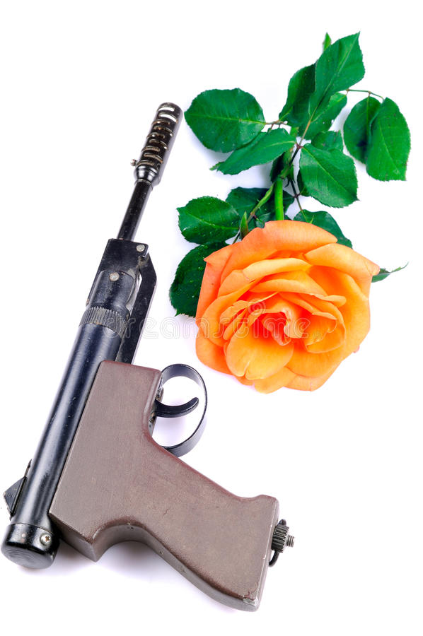 Download War and peace stock photo. Image of blooming, rose, barrel - 20344826