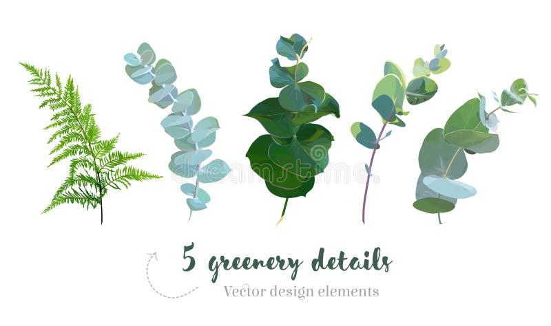 Ware blauwe eucalyptus, bosvaren, gebladerte, bladeren en stammen vector illustratie