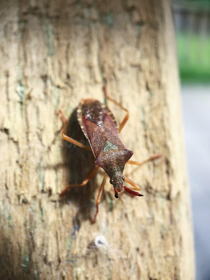 Ware insecten op een boom royalty-vrije stock fotografie