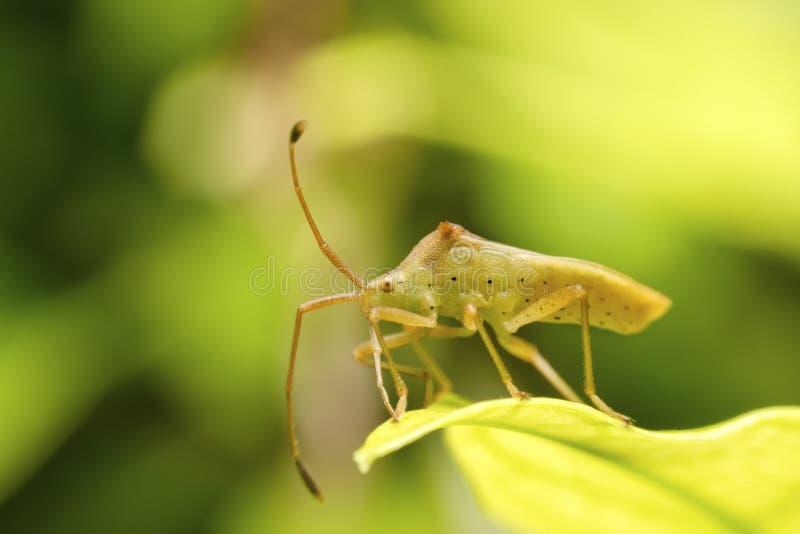 Ware insecten op groen blad royalty-vrije stock afbeeldingen