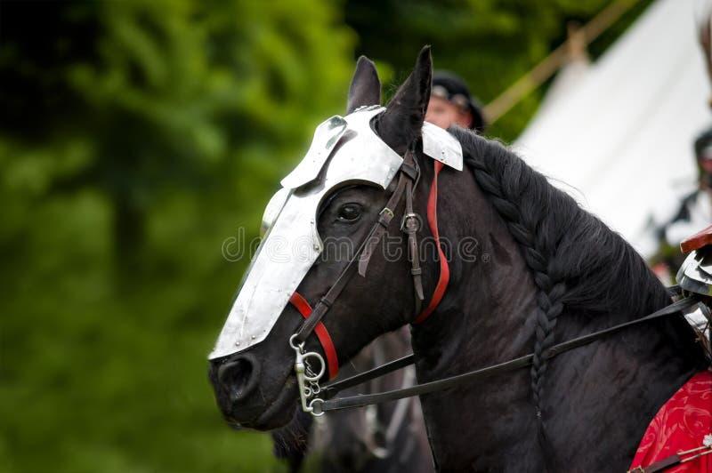 warhorse fotografering för bildbyråer