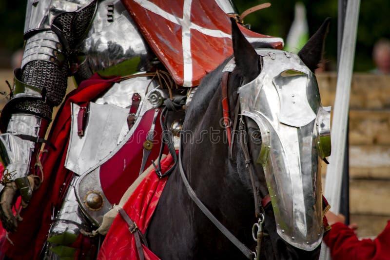 warhorse royalty-vrije stock foto's