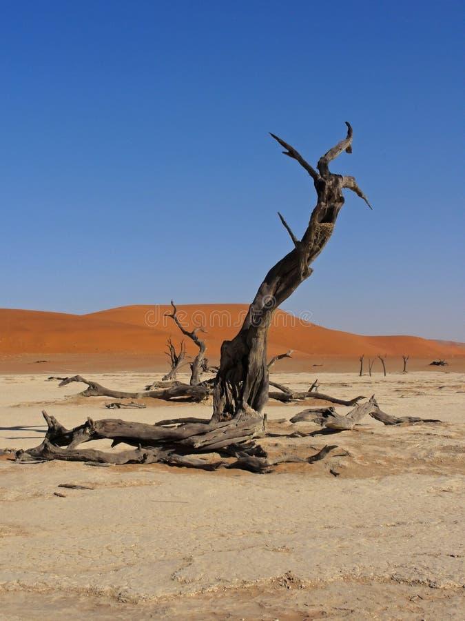 Warkocz przy Deadveli, Namibia zdjęcie royalty free