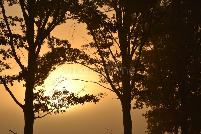 Warkocz z słońcem obrazy stock