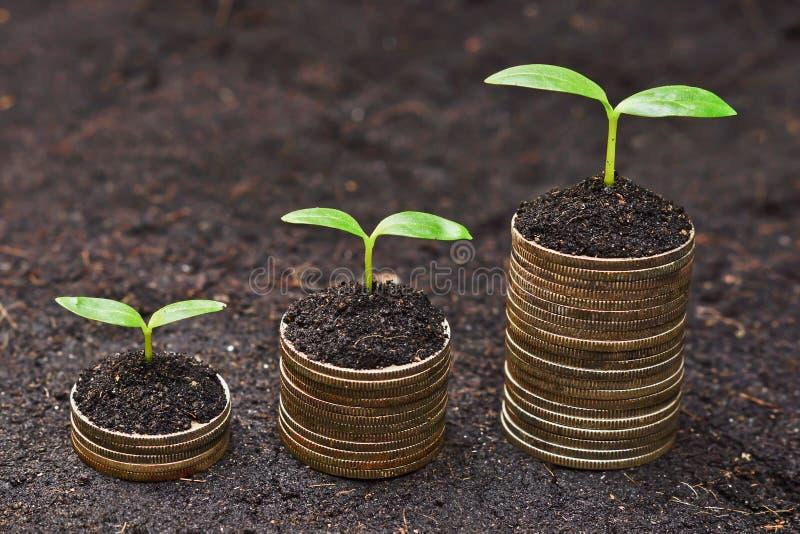 Warkocza dorośnięcie na monetach zdjęcie royalty free