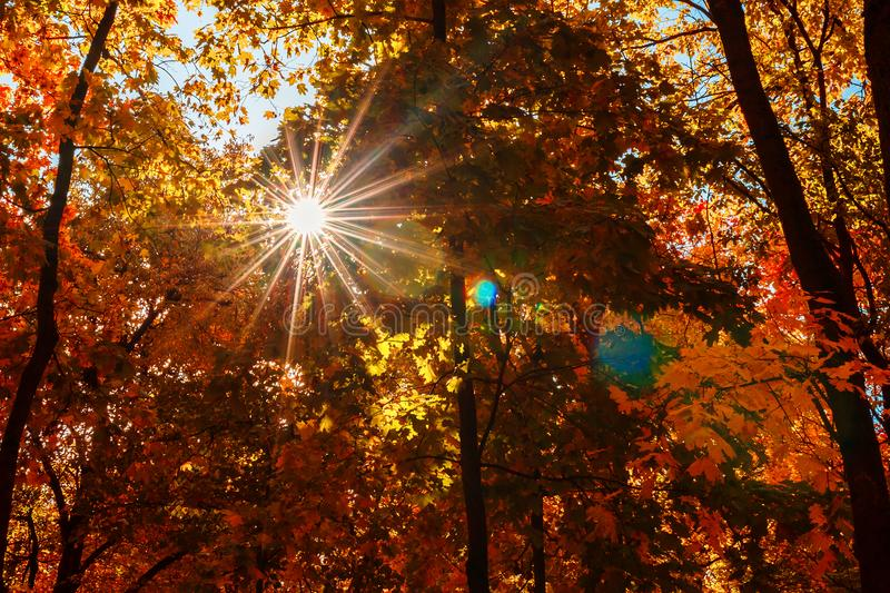 Warm autumn scenery in a forest, with the sun casting beautiful royalty free stock photo