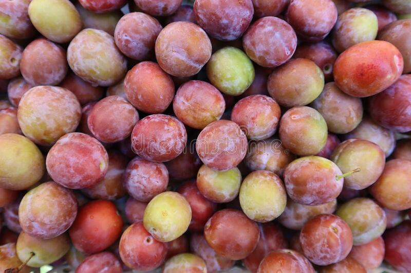 Set of sweet summer fruits.  Small plums just picked from the tree. royalty free stock image