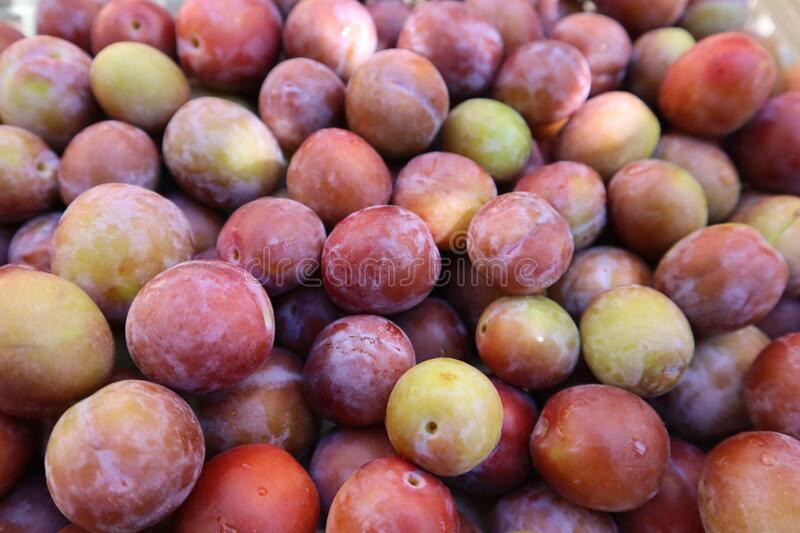 Set of sweet summer fruits.  Small plums just picked from the tree. stock images