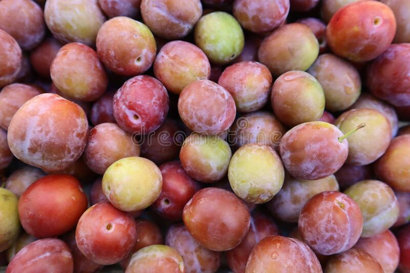 Set of sweet summer fruits.  Small plums just picked from the tree. royalty free stock photo