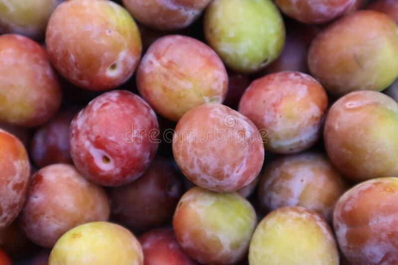 Set of sweet summer fruits.  Small plums just picked from the tree. royalty free stock images