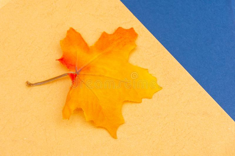 Warm and cool fall seasonal blue and yellow flatlay with festive maple leaf for open concept and copy space availability. Warm and cool fall seasonal blue and royalty free stock photo