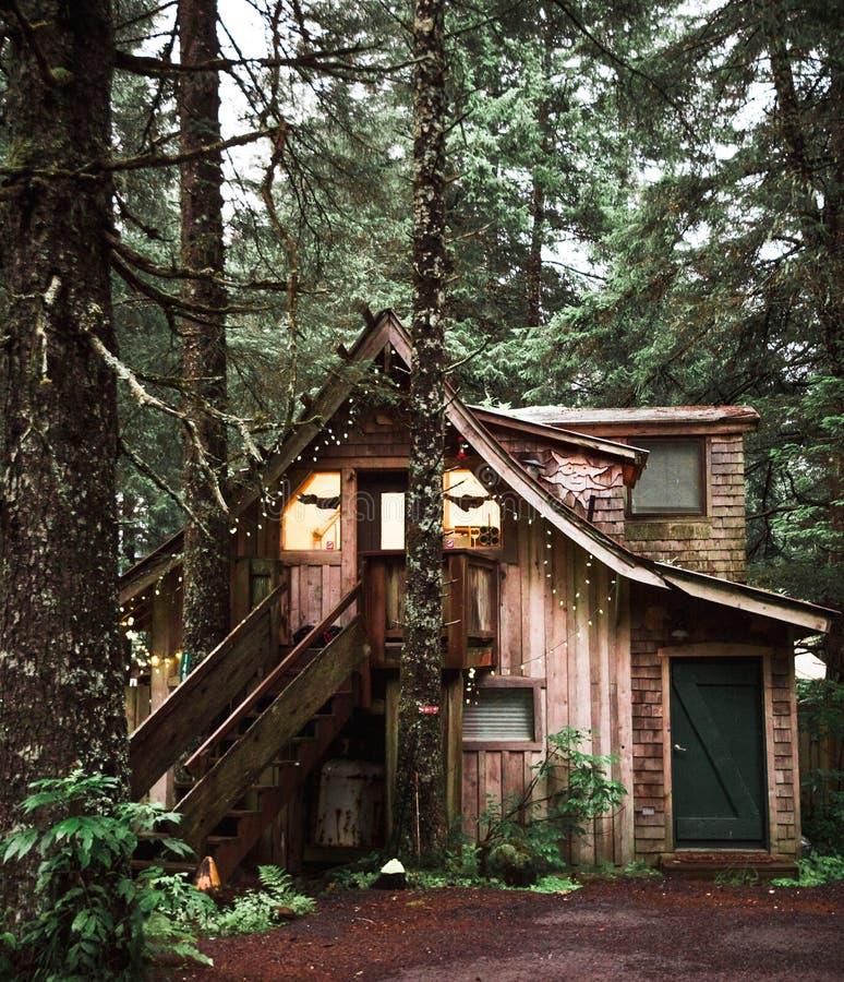 A warm cozy cabin in the rain forest of Alaska near Seward stock photography