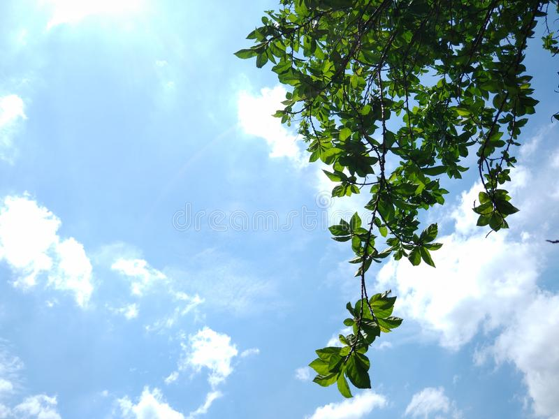 Warm day, sunshine day, beautiful day blue sky white clouds green leaves fresh air. Backgroundblue, bluesky, whiteclouds, warmday royalty free stock photography