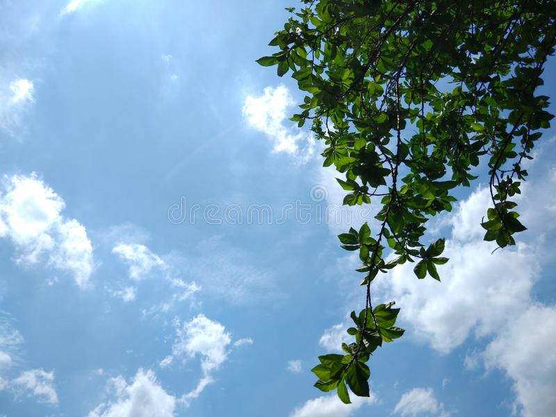 Warm day, sunshine day, beautiful day blue sky white clouds green leaves fresh air. Backgroundblue, bluesky, whiteclouds, warmday, nope stock images