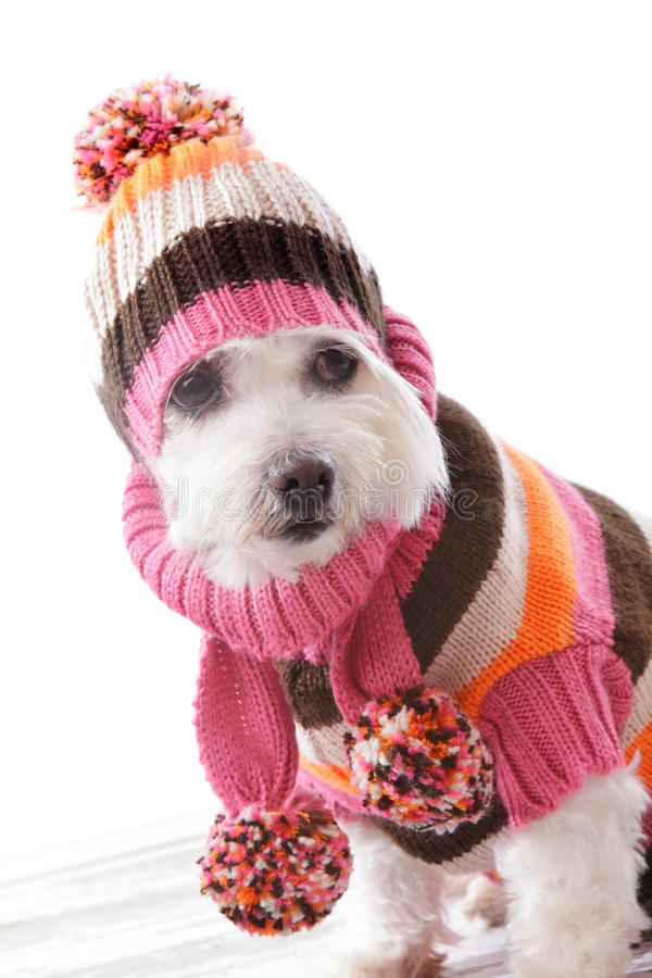 Warm dog wearing knitted beanie and jumper. Cute dog wearing a warm knitted beanie, turtleneck sweater and matching scarf in bold striped colours royalty free stock photos
