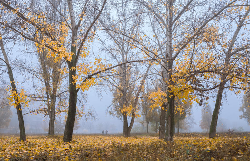 Warm Fall : Morning fog. In the park royalty free stock photo