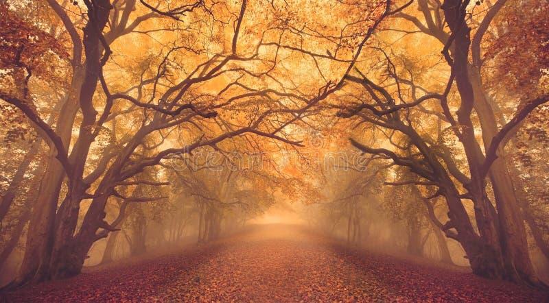 Warm-gloed-herfstbossen met pad royalty-vrije stock foto