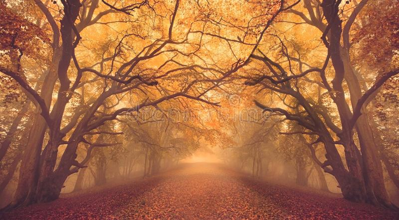 Warm glow Fall Autumn forest woods with path. Warm glow seasonal Fall Autumn forest woods with path, tree and trees branches overhang to create tunnel styled royalty free stock photo
