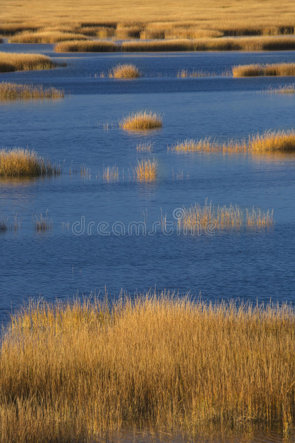 Warm glow of sunset on marsh at Milford Point, Connecticut. Abstract patterns at sunset of grasses in the fall marshes of the Charles E. Wheeler wildlife area stock photos