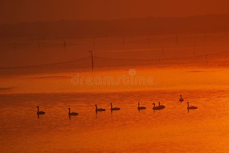 Warm lake stock photography