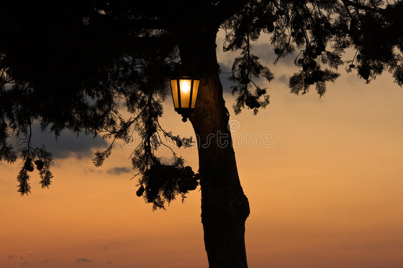 Download Warm light stock photo. Image of evening, glow, leaves - 7264472