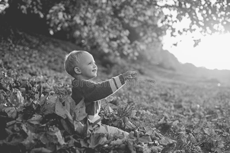 Warm moments of autumn. Toddler boy blue eyes enjoy autumn. Small baby toddler on sunny autumn day. Warmth and coziness. Happy childhood. Sweet childhood stock photography
