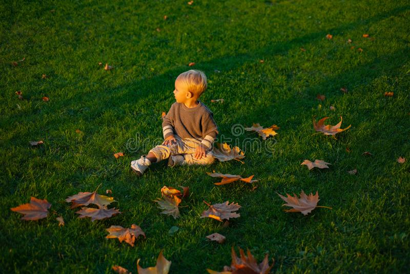 Warm moments of autumn. Toddler boy blue eyes enjoy autumn. Small stylish baby toddler on sunny autumn day. Happy. Childhood. Kids fashion. Childhood memories royalty free stock photo