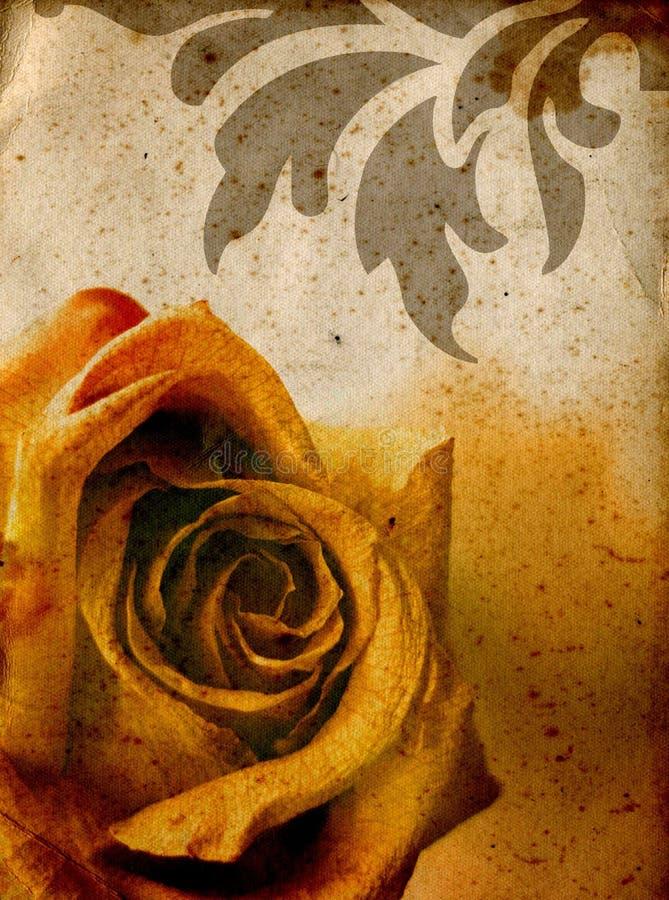Warm rose background vector illustration