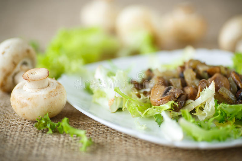 Warm salad with mushrooms. Warm salad with fried mushrooms and lettuce stock image