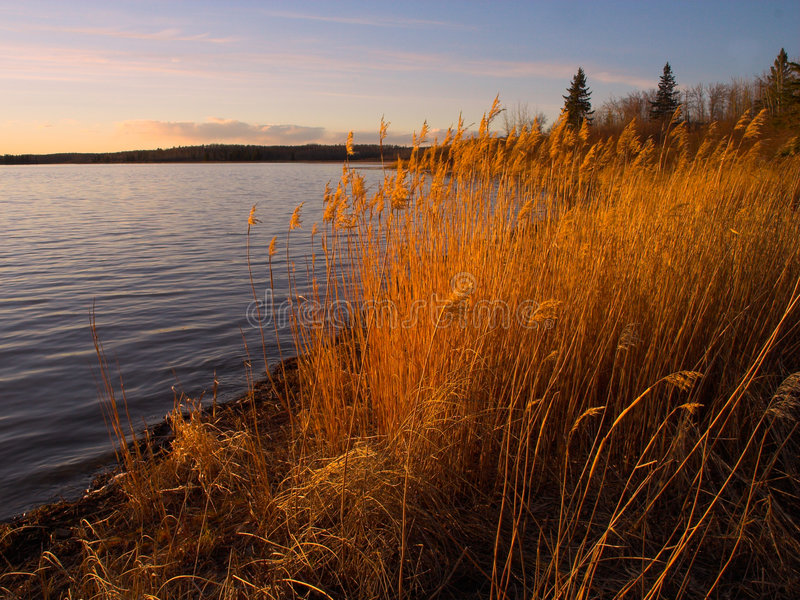 Download Warm Shoreline stock photo. Image of tranquil, shoreline - 488670