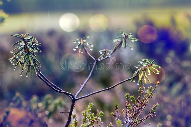 Forest is crying drippings in day with fine rain. Warm spring rain, awakening of nature. Forest is crying drippings in day with fine rain, light sprinkle. Round stock images