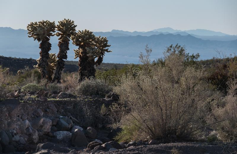 Warm Springs Wilderness, western Arizona. View toward the Mohave Valley from the Warm Springs Wilderness in the Black Mountains of Arizona stock photography
