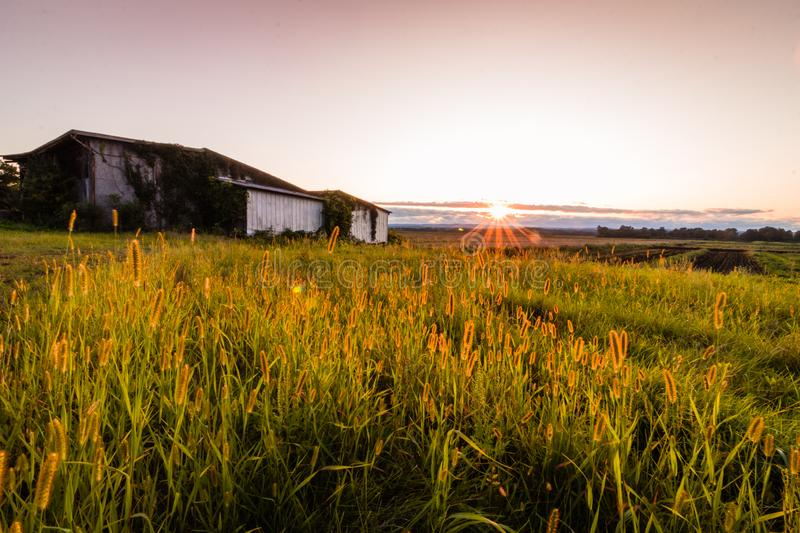 Warm summer sunset over a humble farm and shanty in the Black Dirt region of Pine Island, New York royalty free stock photo
