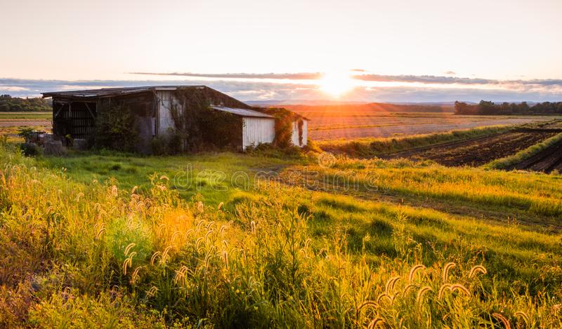 Warm summer sunset over a humble farm and shanty in the Black Dirt region of Pine Island, New York stock photo
