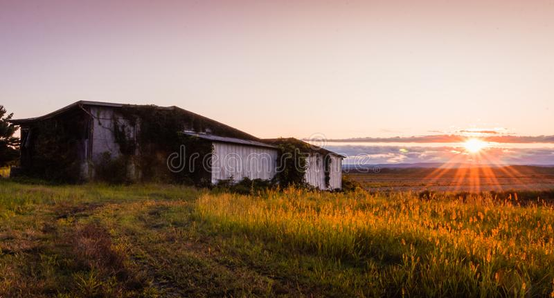 Warm summer sunset over a humble farm and shanty in the Black Dirt region of Pine Island, New York royalty free stock images