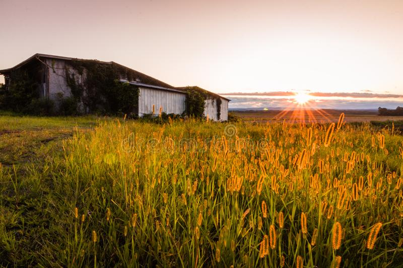 Warm summer sunset over a humble farm and shanty in the Black Dirt region of Pine Island, New York royalty free stock photography