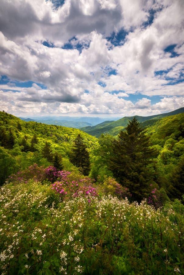 Blue Ridge Parkway North Carolina Spring Flowers Mountain Scenic Landscape Photography stock image