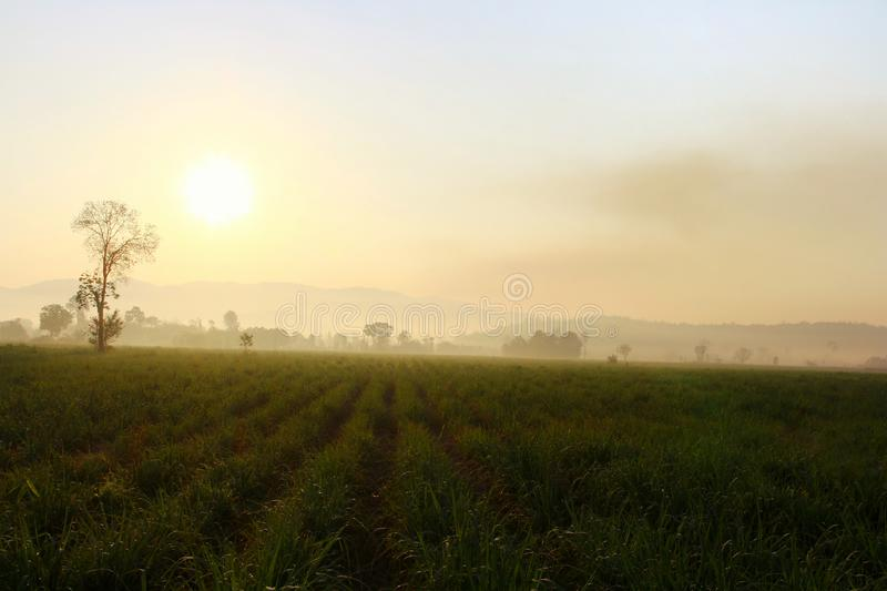 Warm sunlight on The hills in the fog. Morning landscape with cane farm.  stock photos