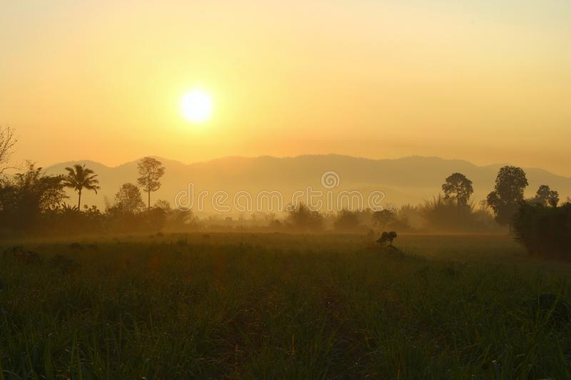 Warm sunlight on The hills in the fog. Morning landscape with cane farm.  royalty free stock photo