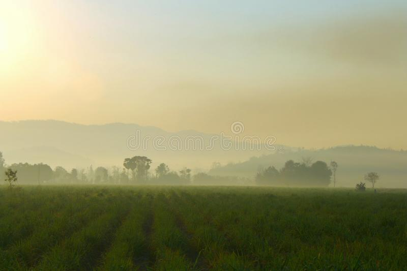 Warm sunlight on The hills in the fog. Morning landscape with green cane farm.  royalty free stock images