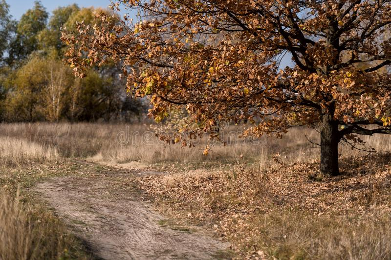 Warm and sunny autumn in Kiev, Ukraine.  royalty free stock images