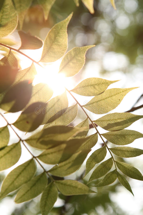 Warm sunshine with green leaf stock photography