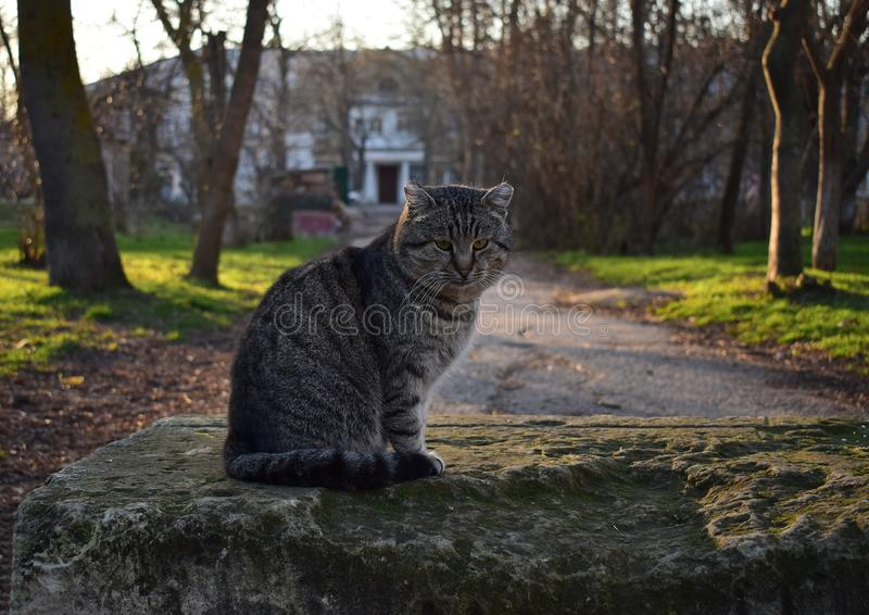 Cat in the yard. Spring stock photos