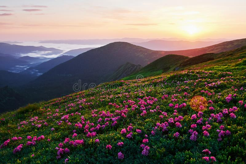 Warm weather. Majestic Carpathian mountains. Beautiful landscape. Breathtaking view royalty free stock photography