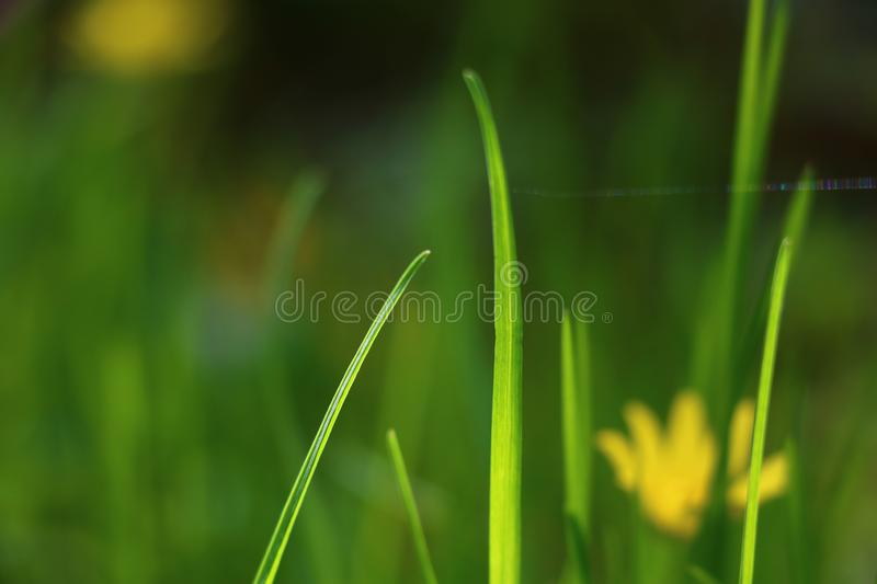 With a warm wind grass source. Hello, spring first grass! How did it come out? Are you happy with the heat? I know, y there you are fun and crush, Work together stock photography