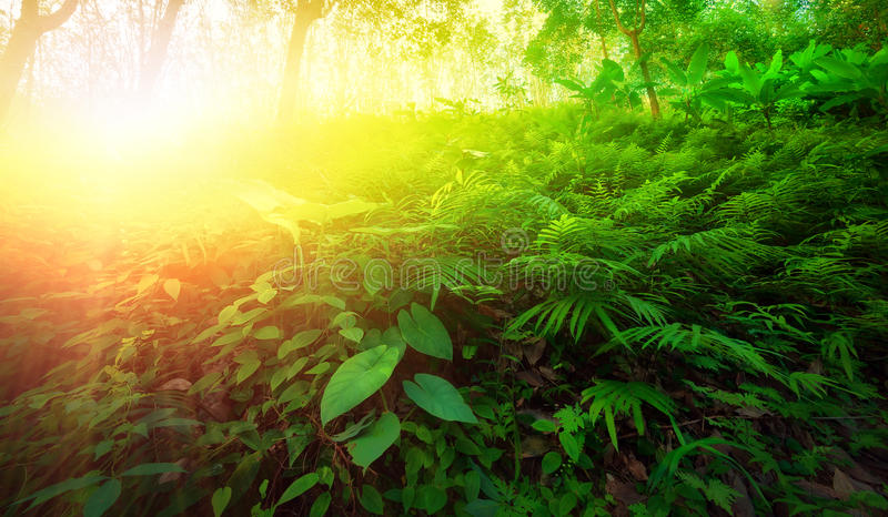 Warm yellow sunlight shines through leaves and tree branches royalty free stock image