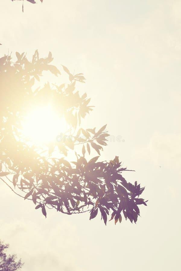 Warm zonlicht royalty-vrije stock foto